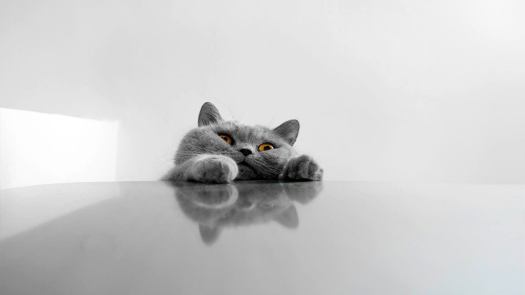 Funny Cat Wallpaper