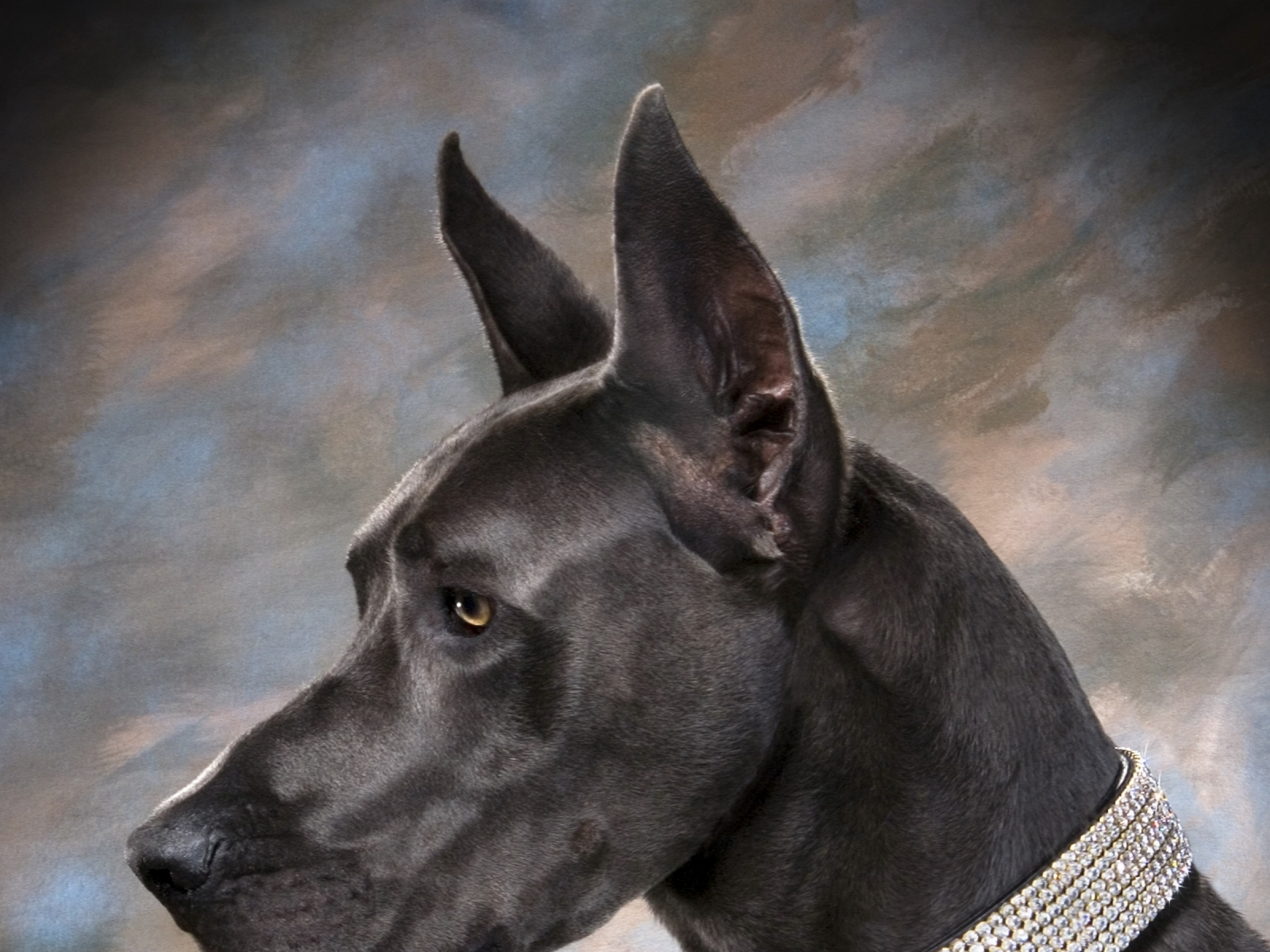 Great dane wallpapers pictures images great dane wallpaper great dane wallpaper voltagebd Gallery