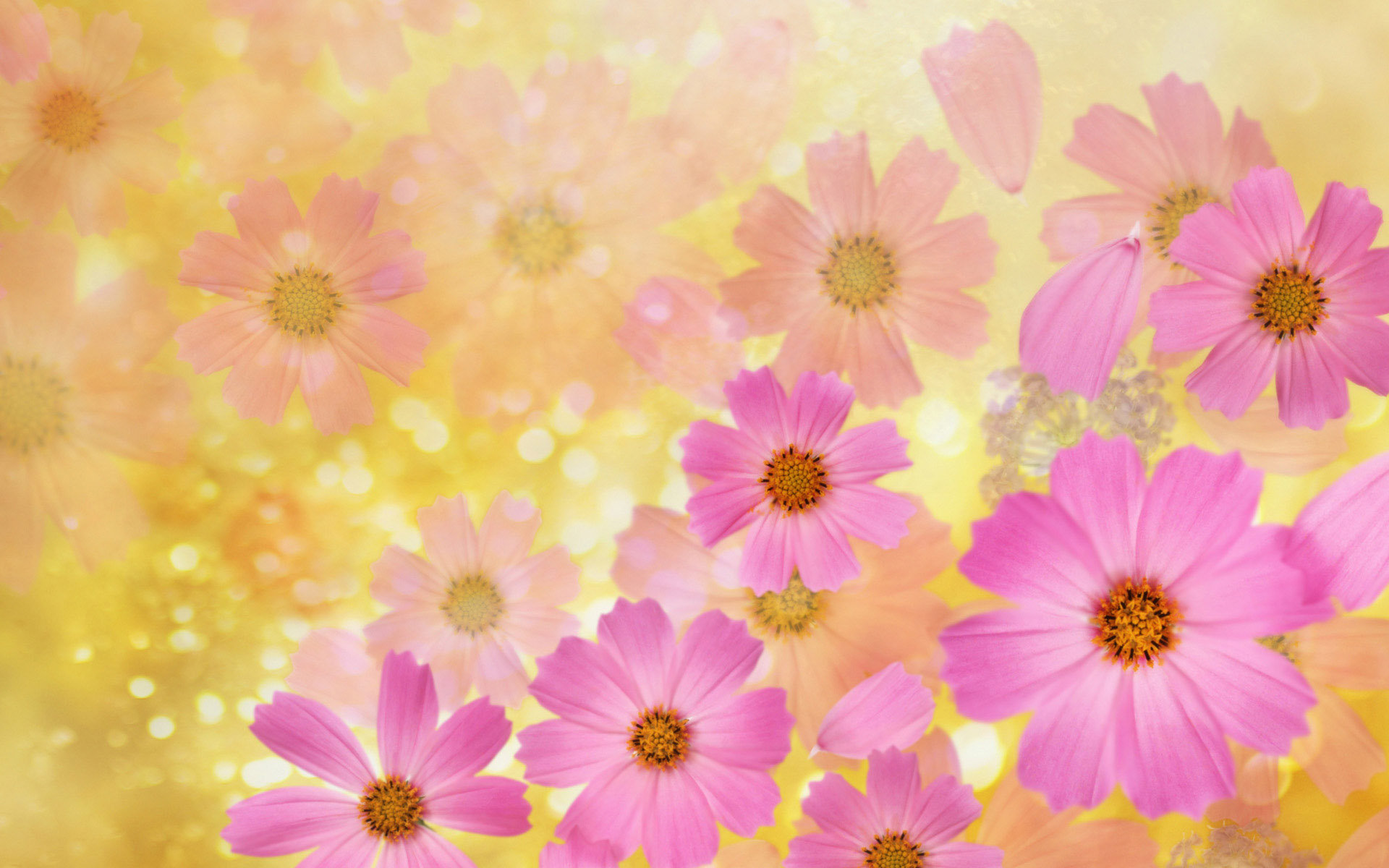 Beautiful spring wallpapers pictures images - Floral background ...