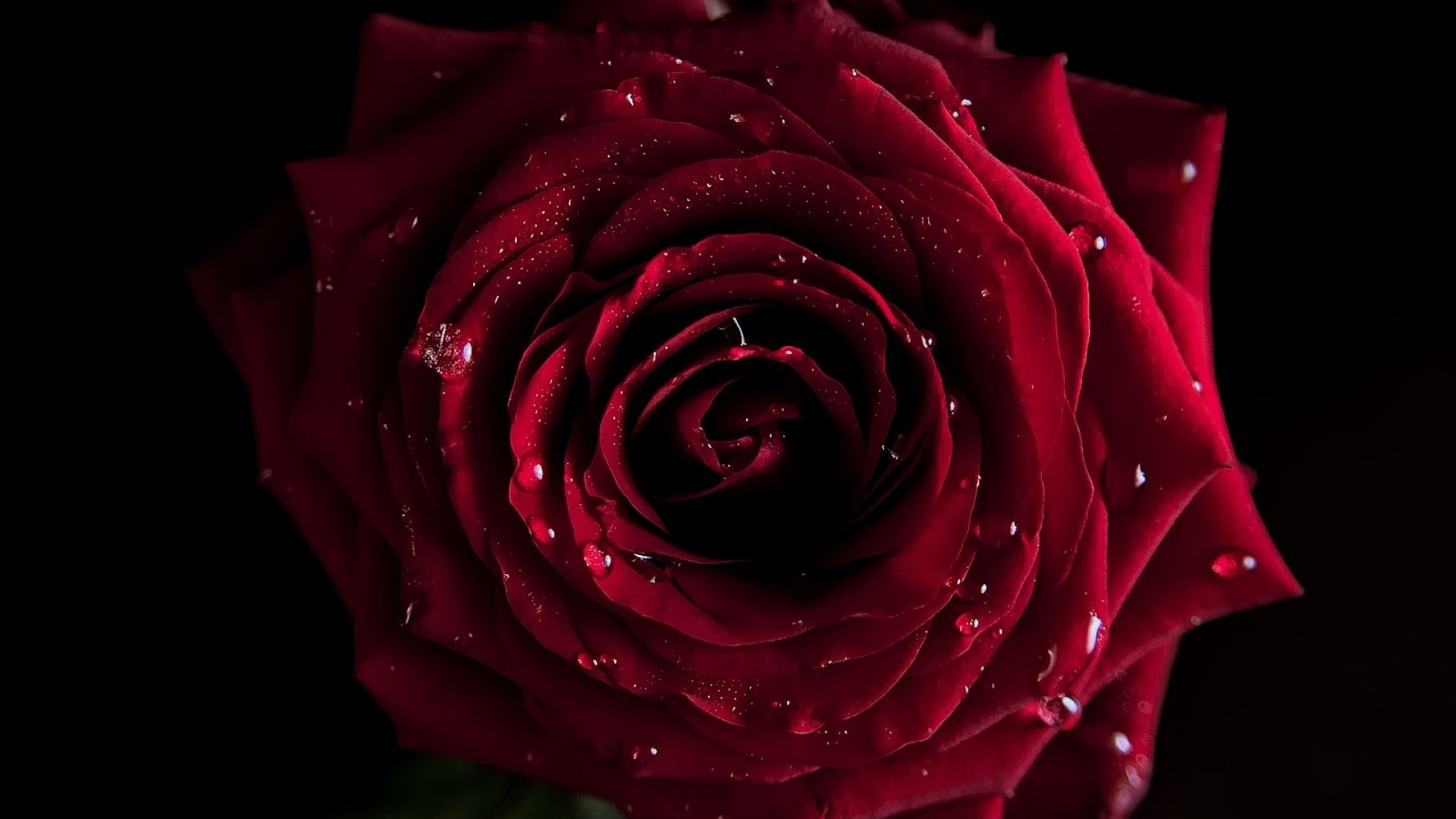 Red rose wallpapers pictures images - Black and red rose wallpaper ...