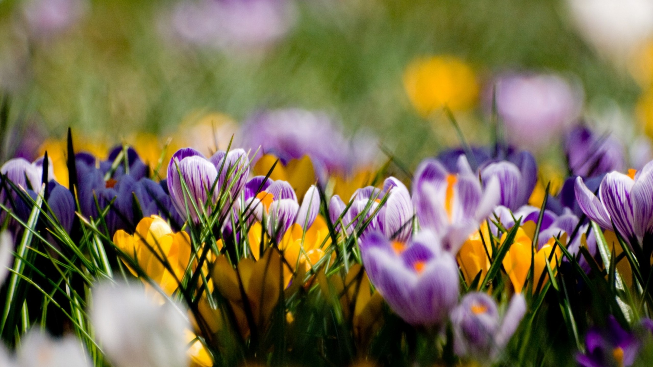 35 Beautiful Spring Pictures And Wallpapers: Beautiful Spring Wallpapers, Pictures, Images