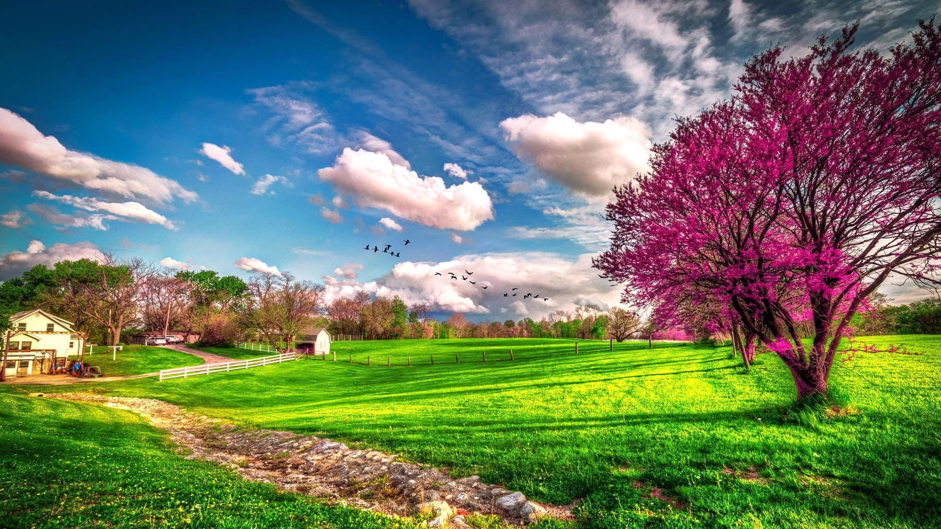 Beautiful spring wallpapers pictures images for Immagini 1920x1080