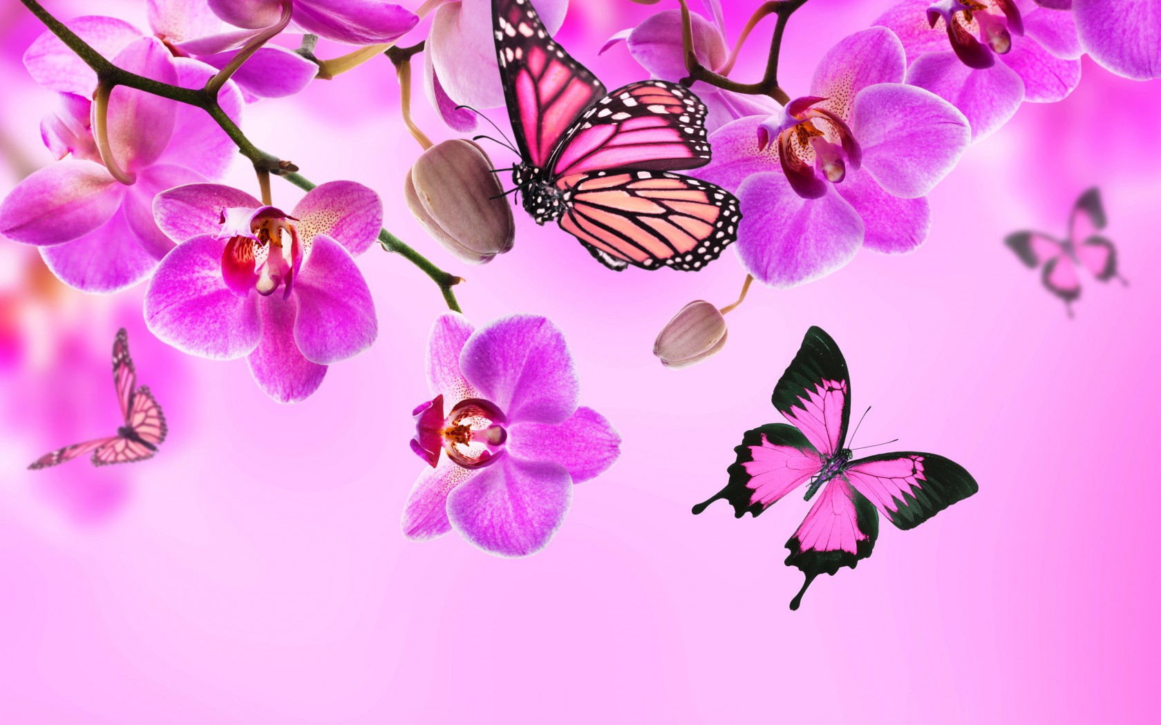 Beautiful Butterflies Wallpapers Pictures Images