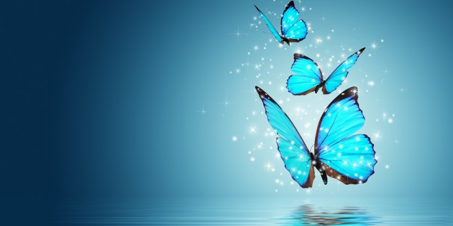 Beautiful Butterflies Wallpapers