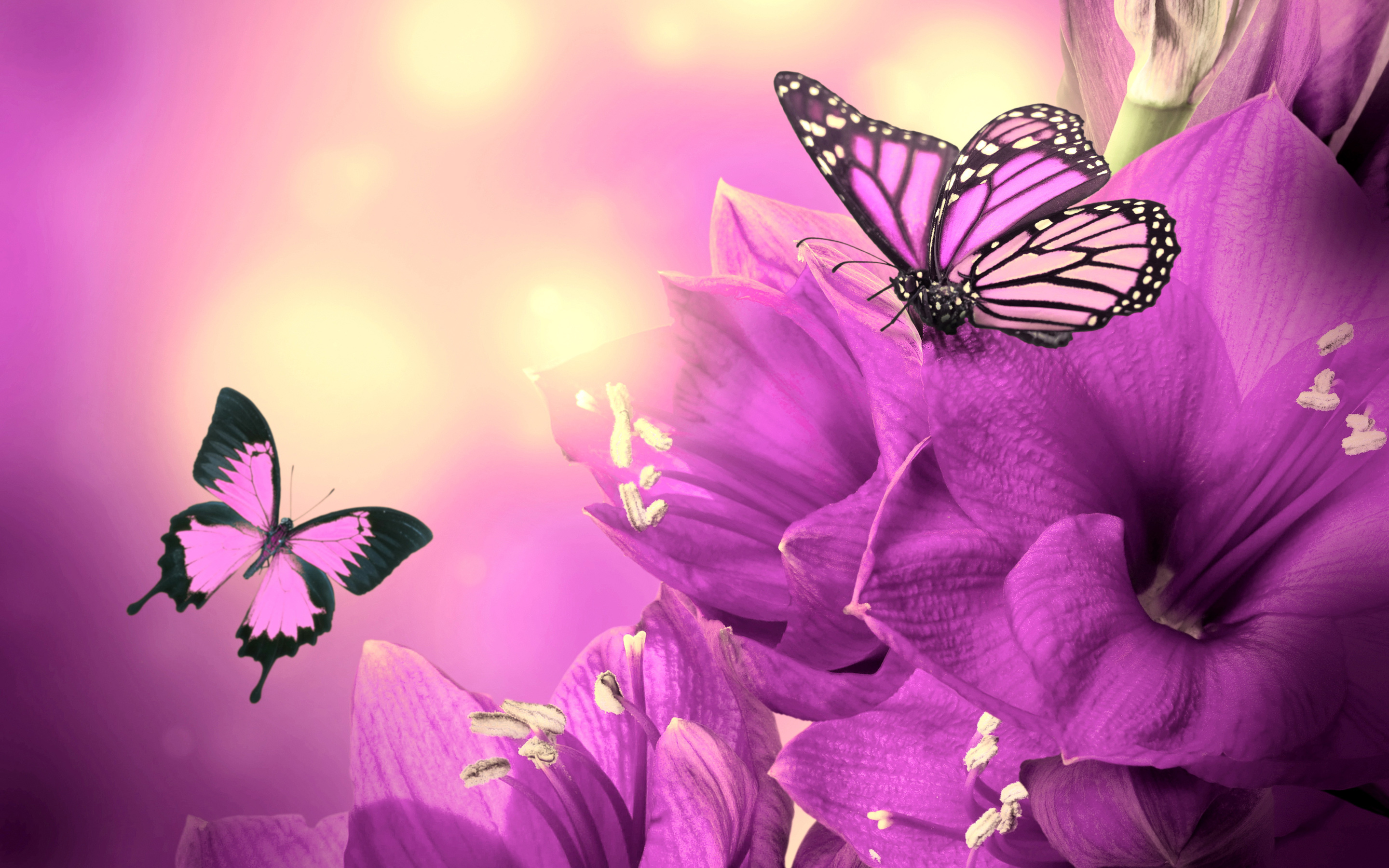 Butterflies Wallpapers Hd Download: Beautiful Butterflies Wallpapers, Pictures, Images