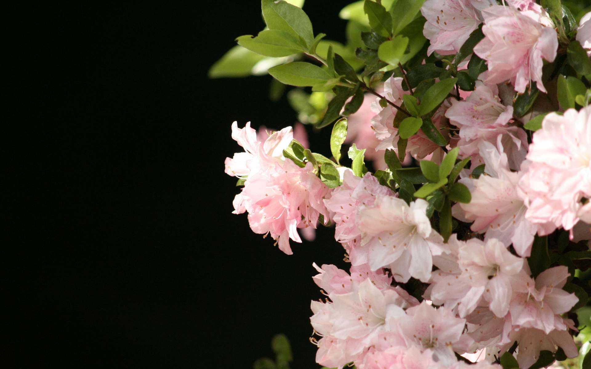 Beautiful wallpapers and images of flowers -  Beautiful Flowers Wallpaper