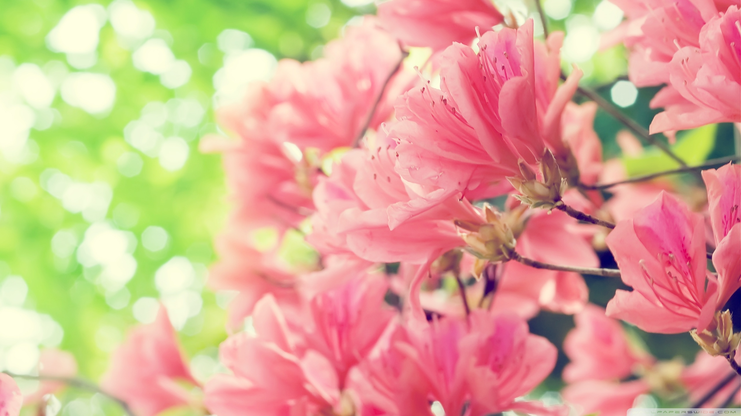 Beautiful flowers wallpapers pictures images beautiful flowers wallpaper mightylinksfo