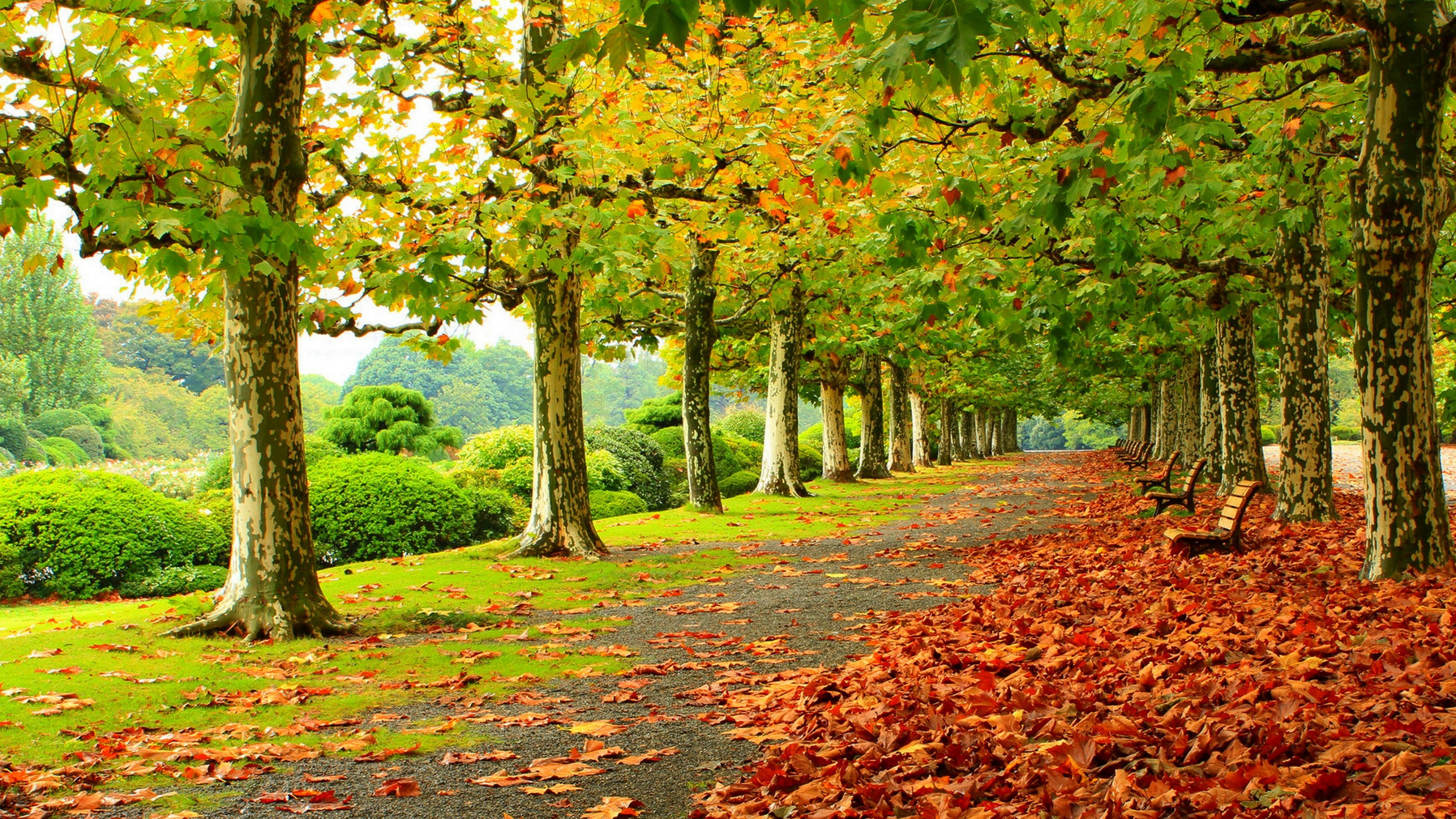 Autumn Scenery Wallpapers Pictures Images