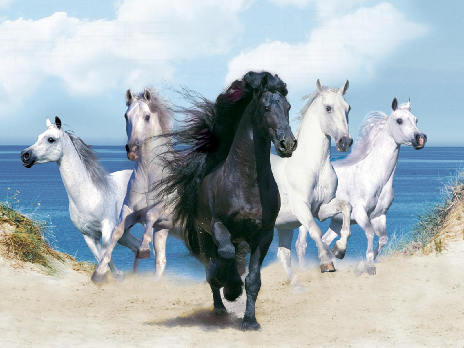 Fantasy <b>white horse</b> - Fantastic <b>horse</b> hair