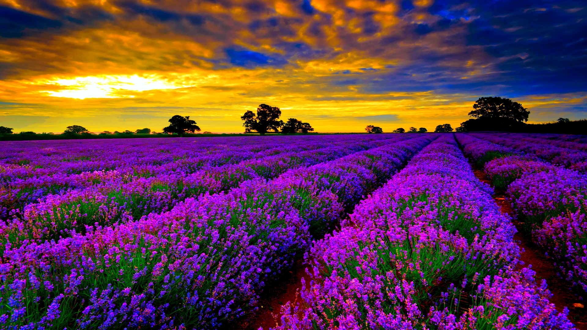 Colorful wallpapers pictures images - Colorful background hd ...