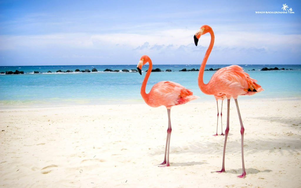 Flamingos Birds Wallpaper