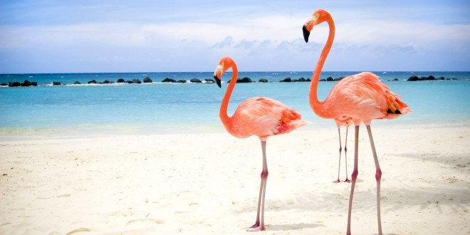 Flamingos Birds Wallpapers
