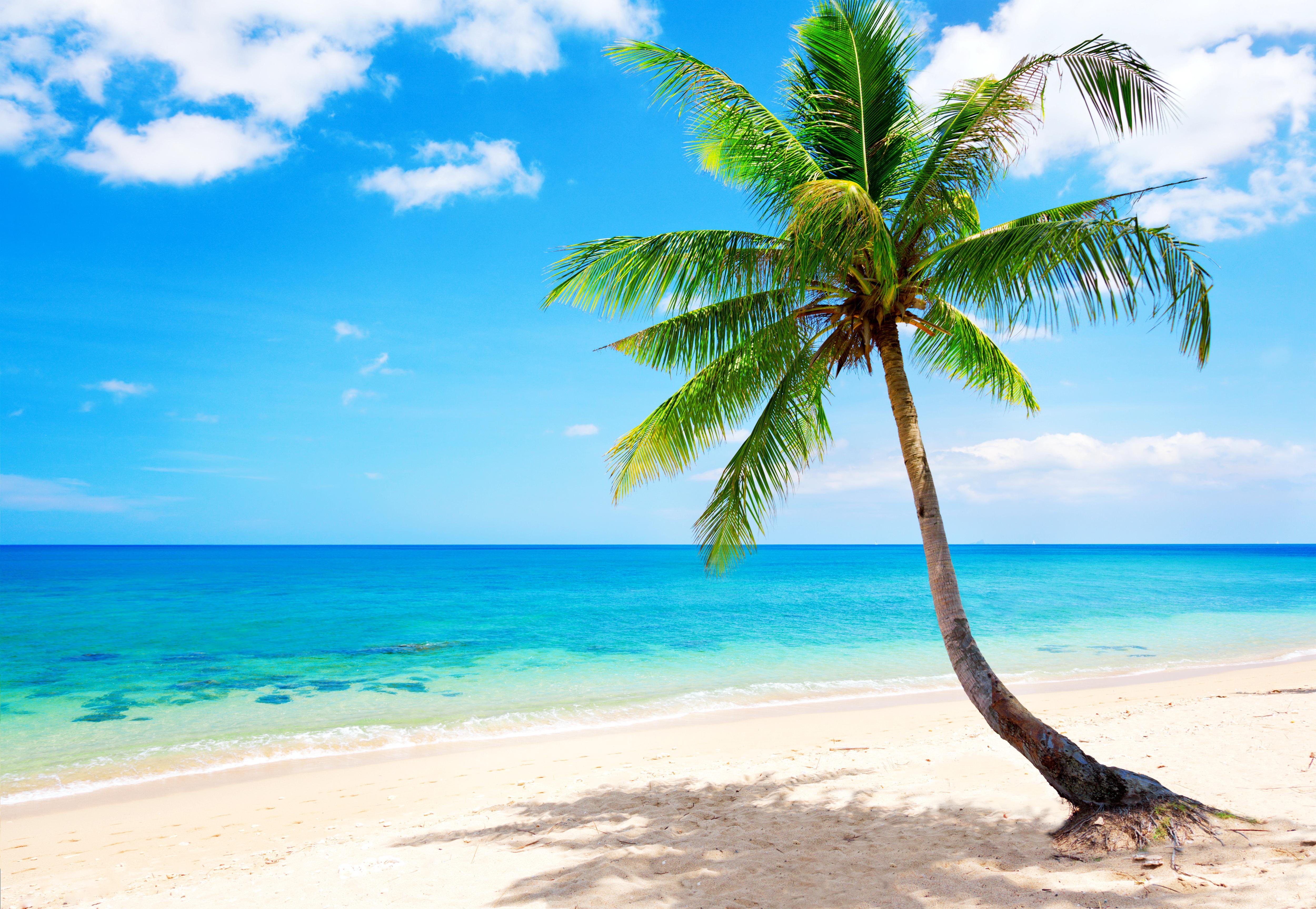 Tropical Paradise Beach Coast Sea Blue Emerald Ocean: Tropical Beach Wallpapers, Pictures, Images