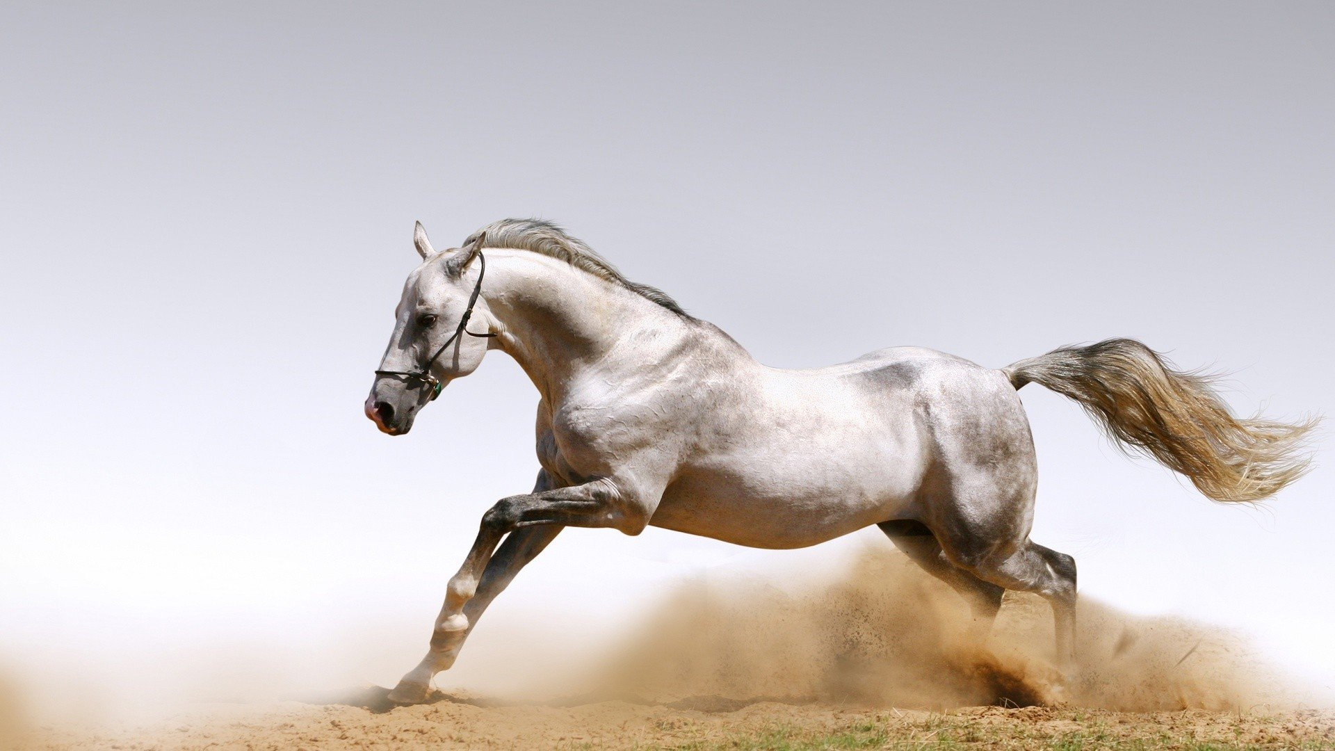 Arabian horse wallpapers pictures images for Wallpaper mare hd