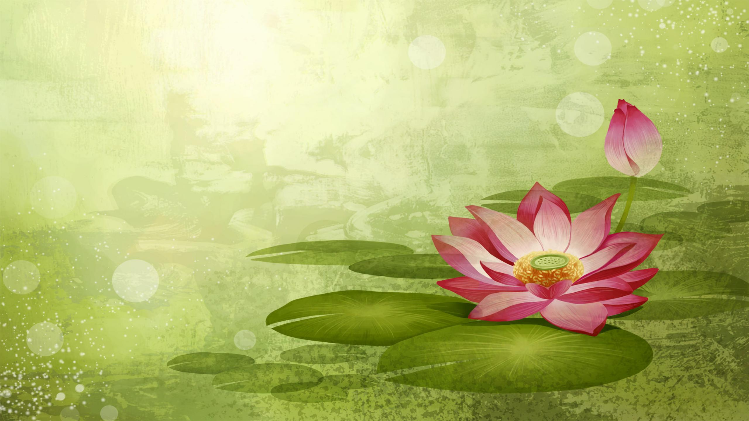 Lotus Flower Wallpapers Pictures Images