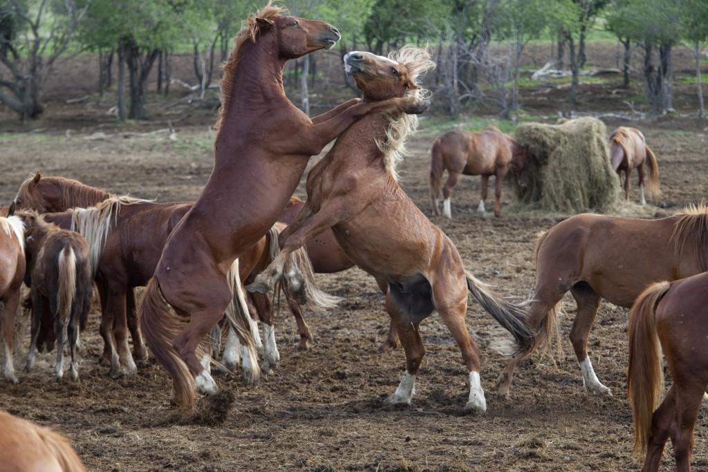 Wild Horse Wallpaper 2048x1365