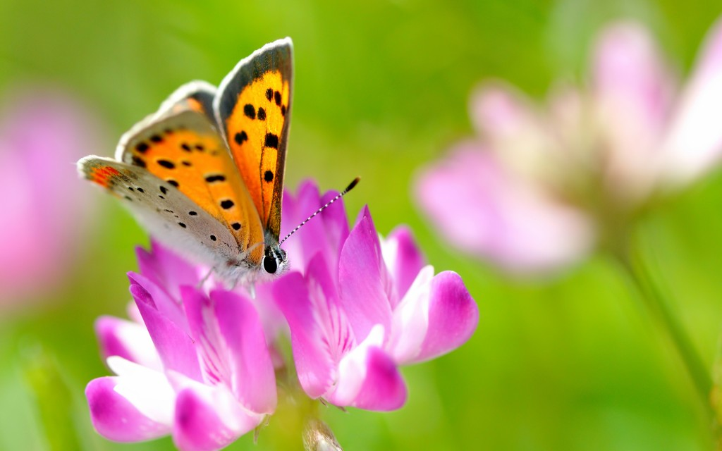 Butterfly Widescreen Wallpaper 1920x1200
