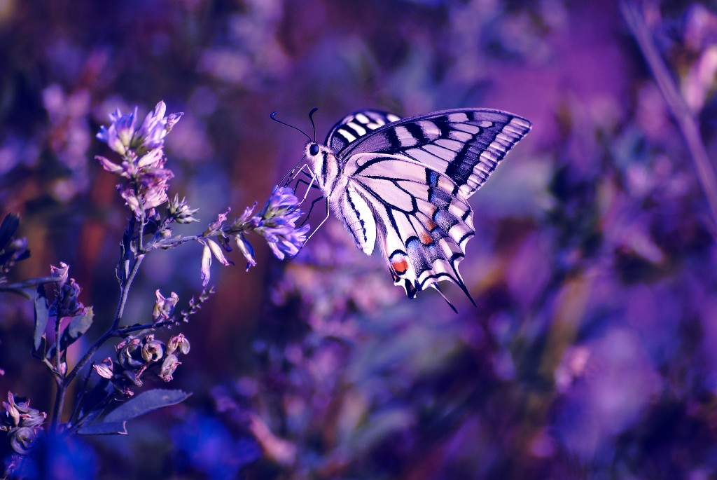 Butterfly Wallpaper 3872x2592