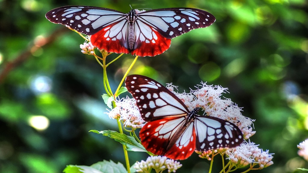 Butterfly Full HD Wallpaper 1920x1080