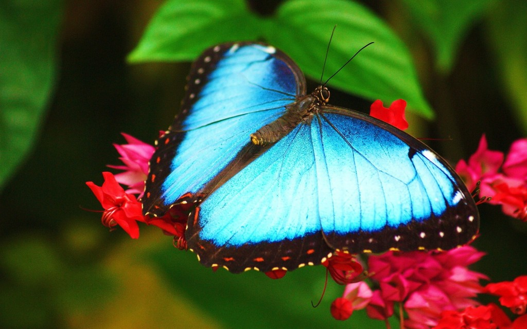 Butterfly Widescreen Wallpaper 2560x1600