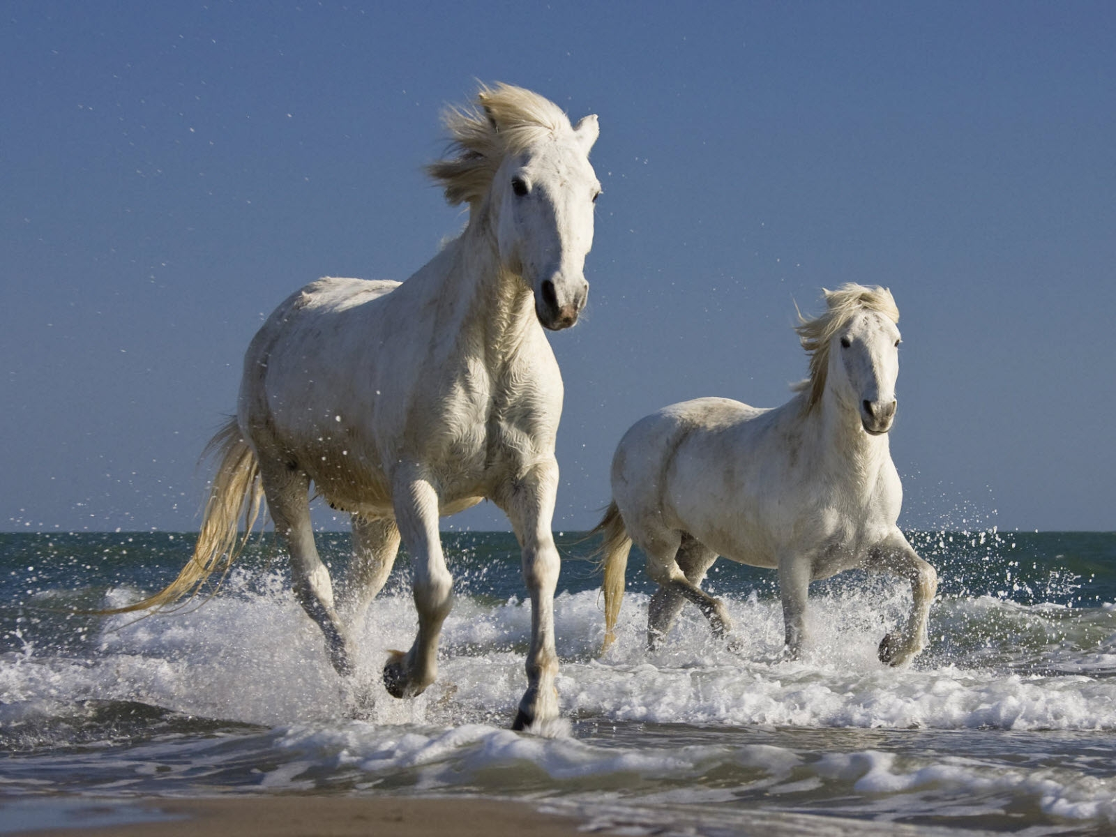 Wild Horse Wallpapers Pictures Images