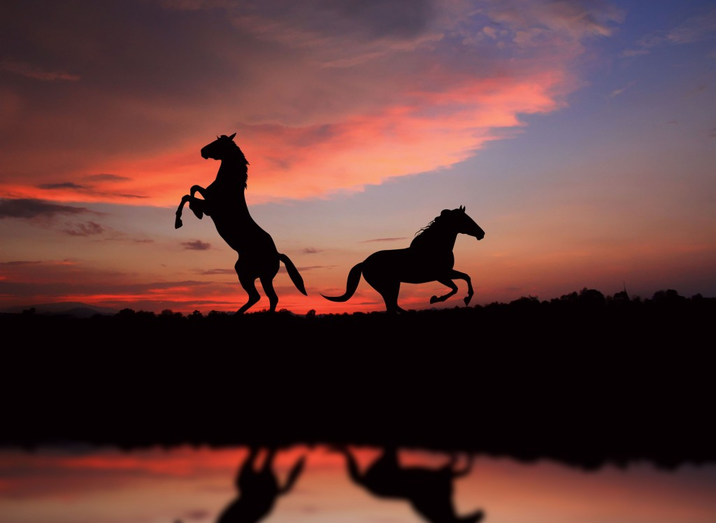 Wild Horse Wallpaper 5912x4311