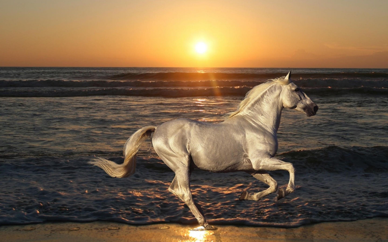 Wild Horse Widescreen Wallpaper 2880x1800