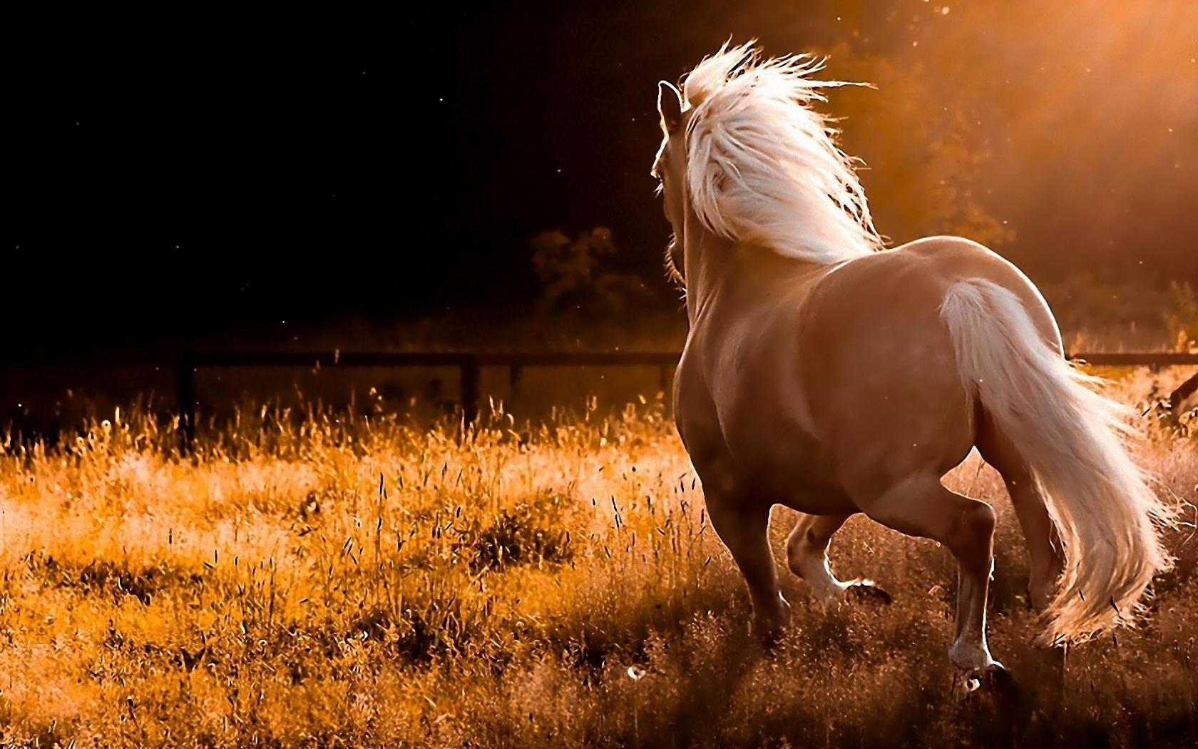 Hd wallpaper horse - Wild Horse Widescreen Wallpaper 1680x1050