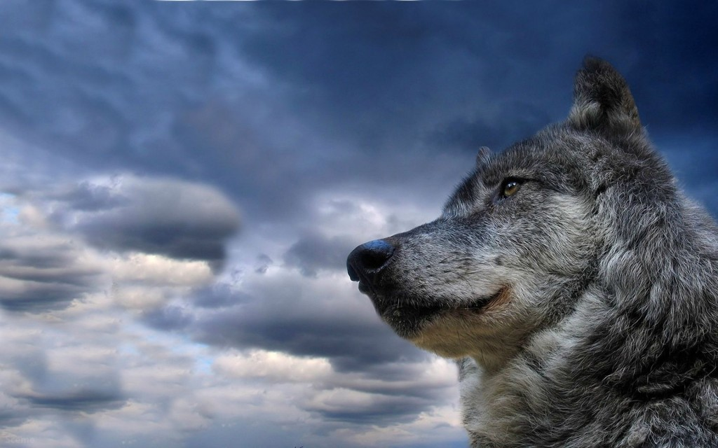 Wolf Widescreen Wallpaper 1920x1200