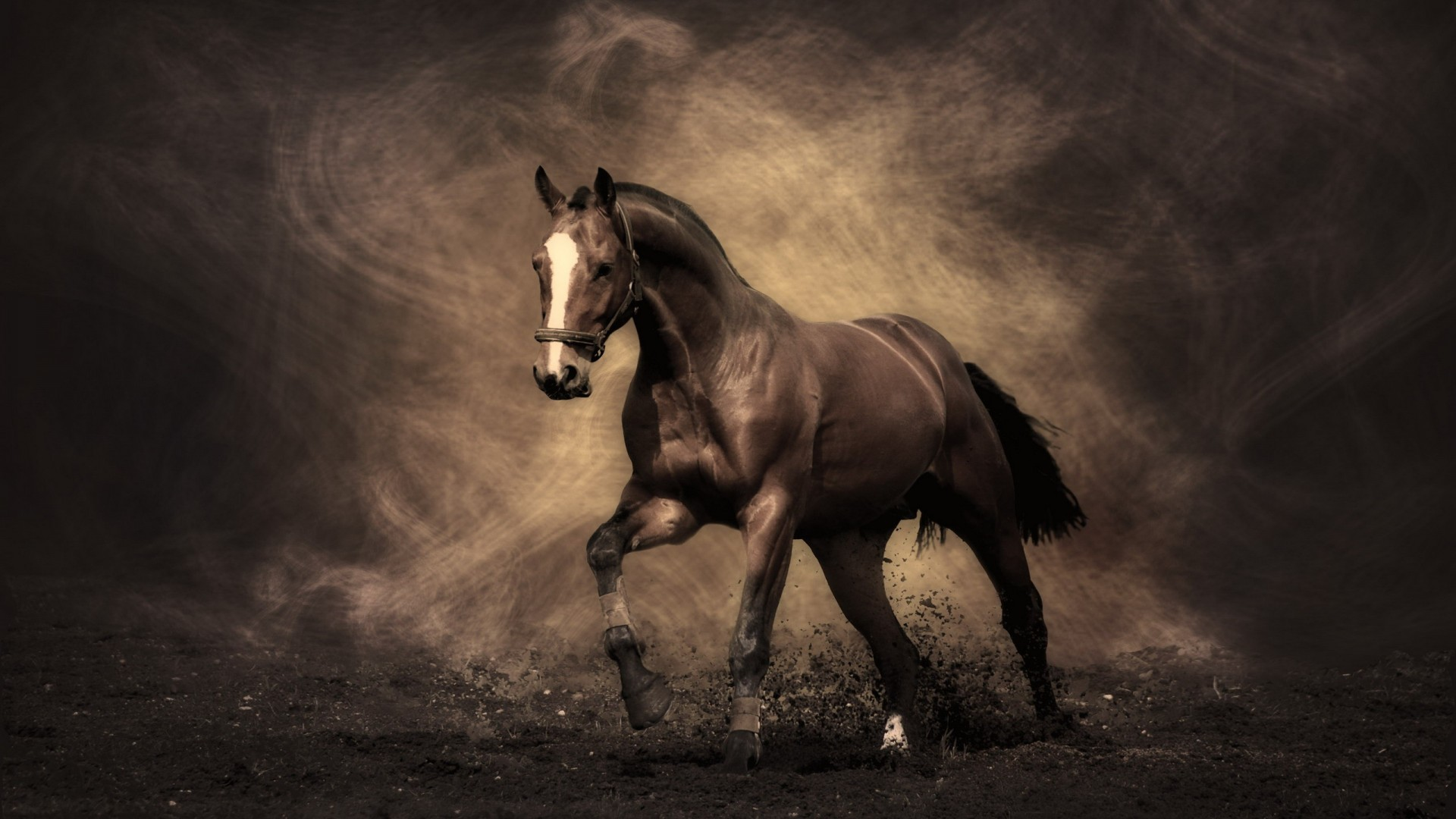 wild horses racing wallpaper - photo #35