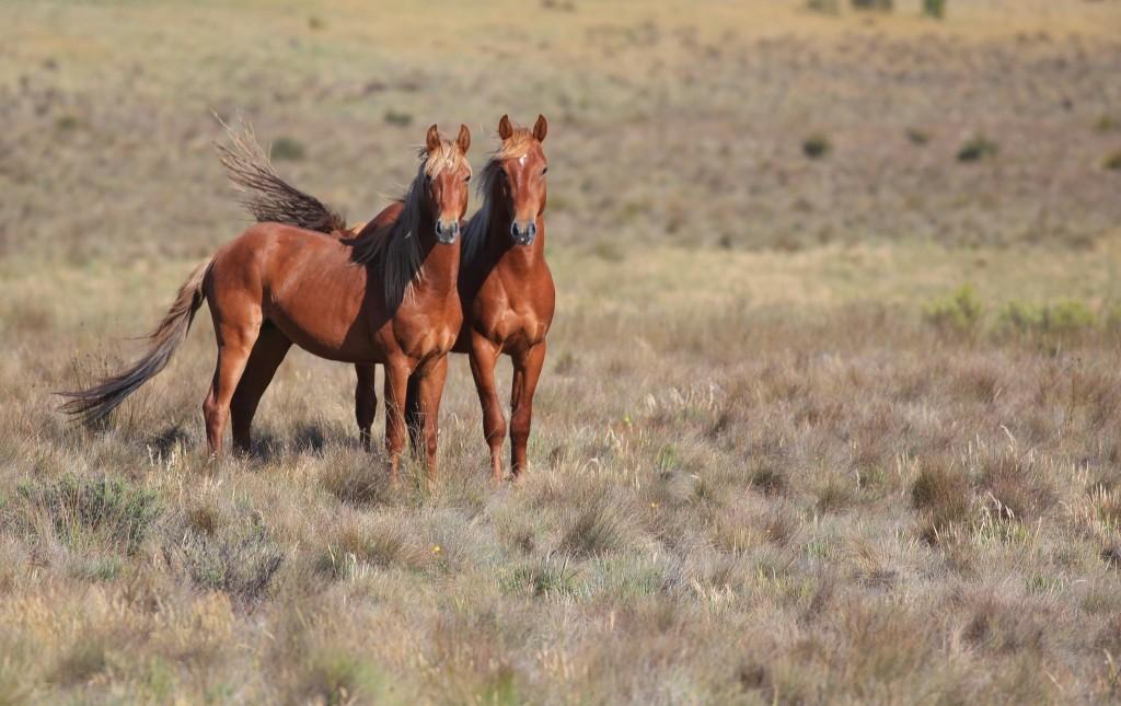 Wild Horse Wallpaper 2048x1289