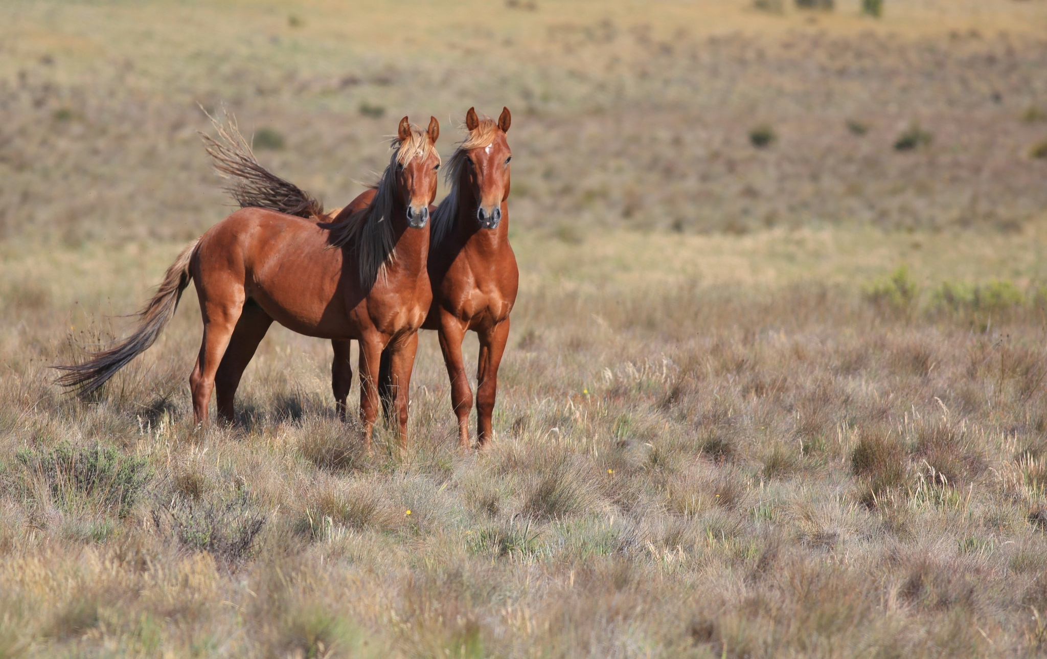wild horse hd wallpapers - photo #44