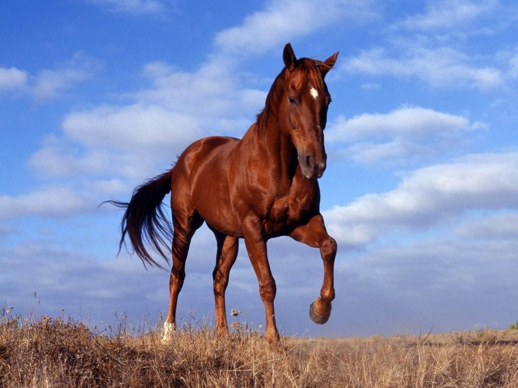 Wild Horse Wallpaper 1600x1200