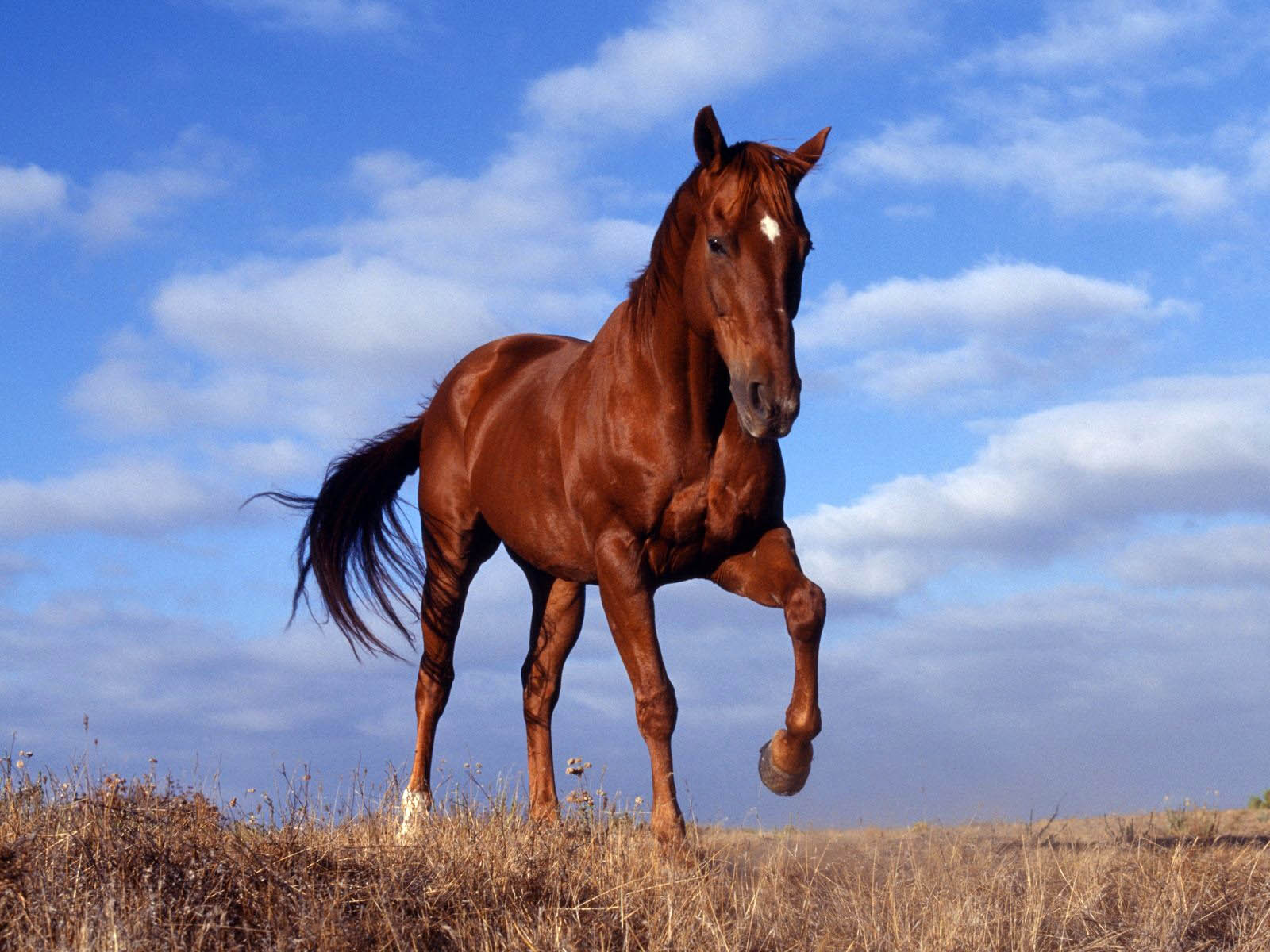 Wild horse wallpapers pictures images for Beautiful horses