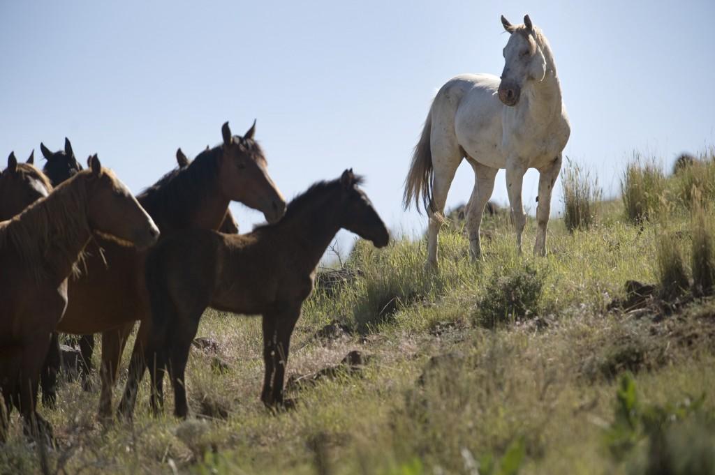 Wild Horse Wallpaper 2800x1863
