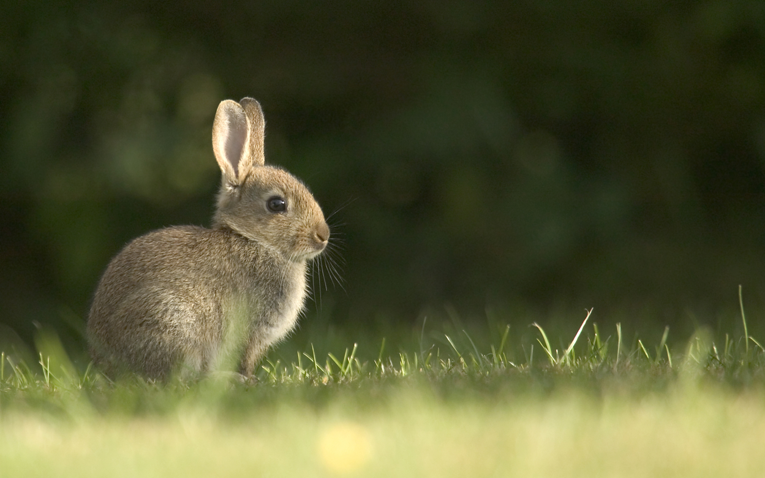 bunny computer wallpapers - photo #19