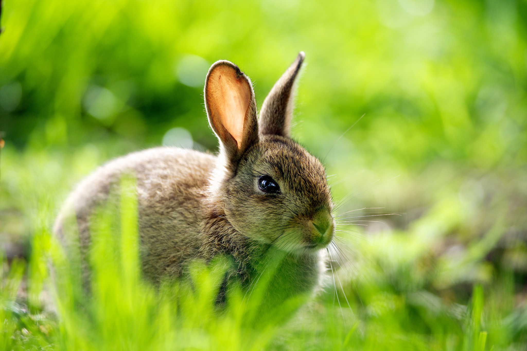 rabbit wallpapers pictures images