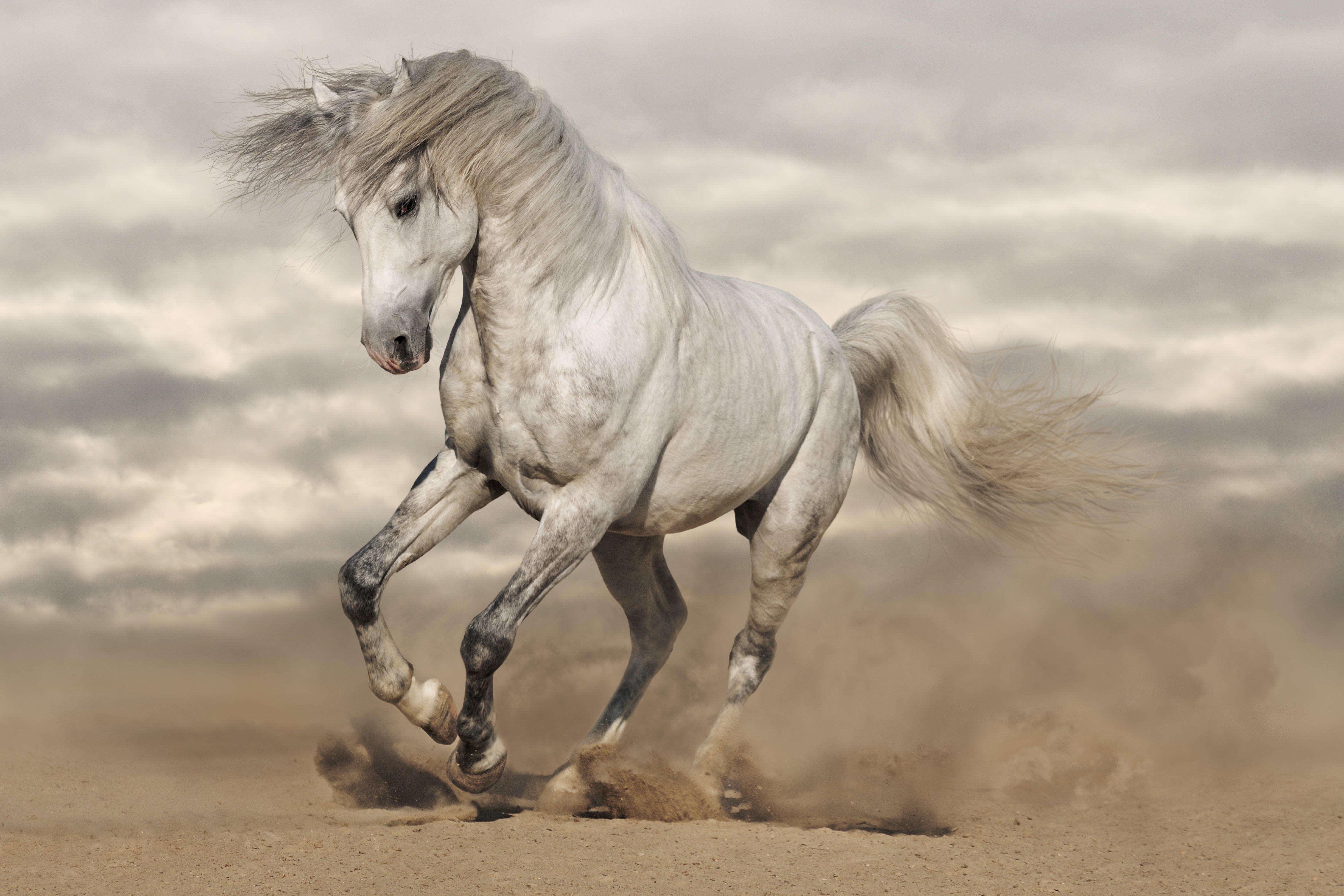 White Horse Wallpaper 7296x4864