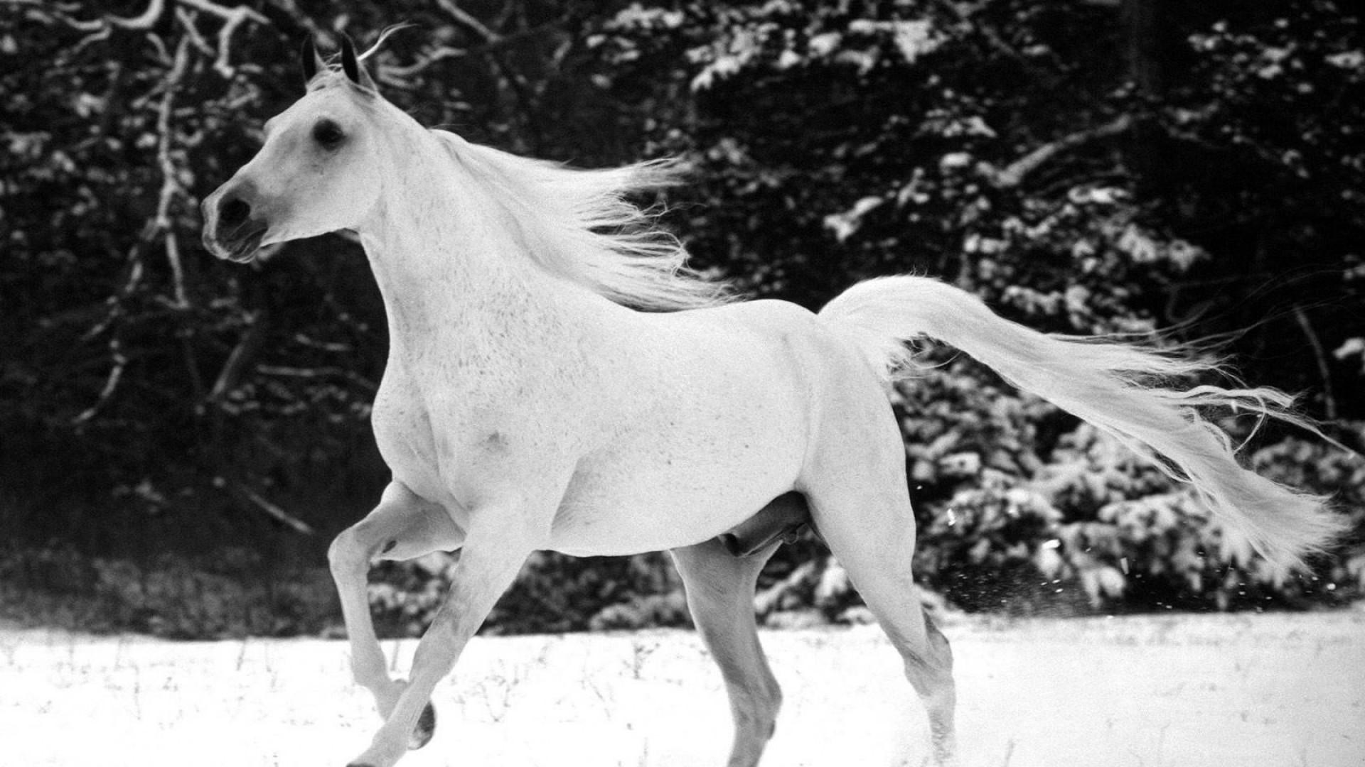 Full Hd Xxxx Horse Video 1080