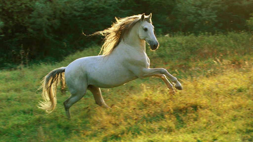 White Horse Full HD Wallpaper 1920x1080