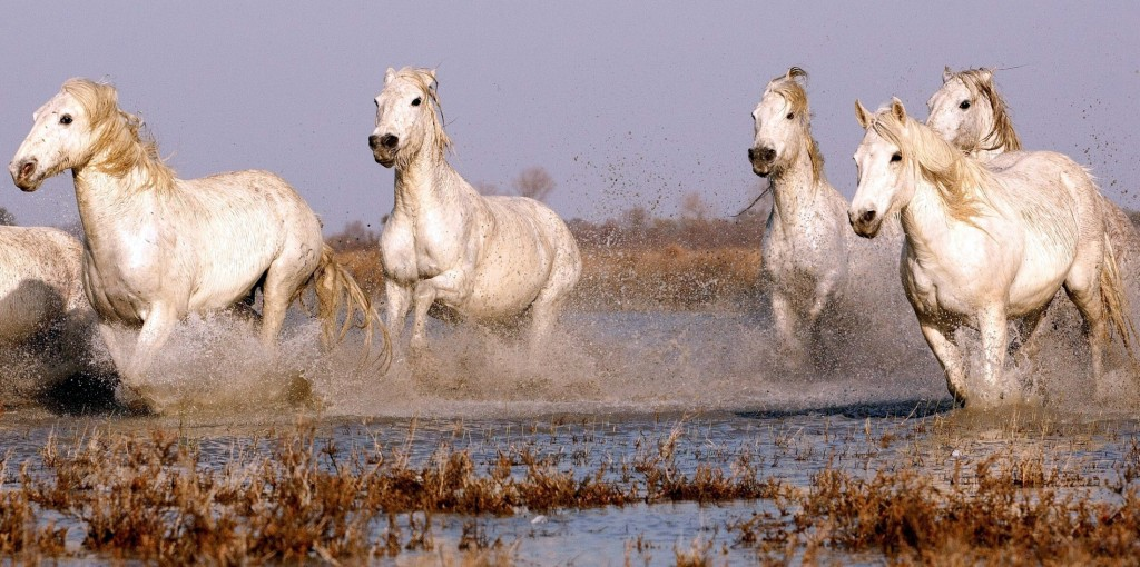 White Horse Wallpaper 2200x1095