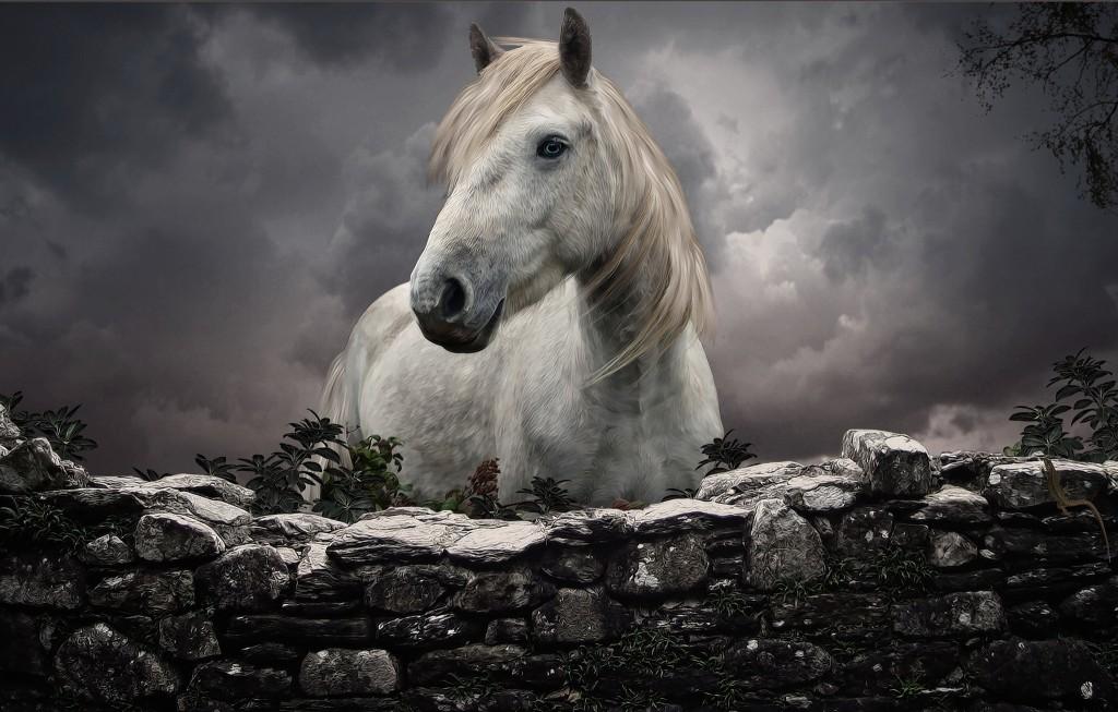 White Horse Wallpaper 2048x1305