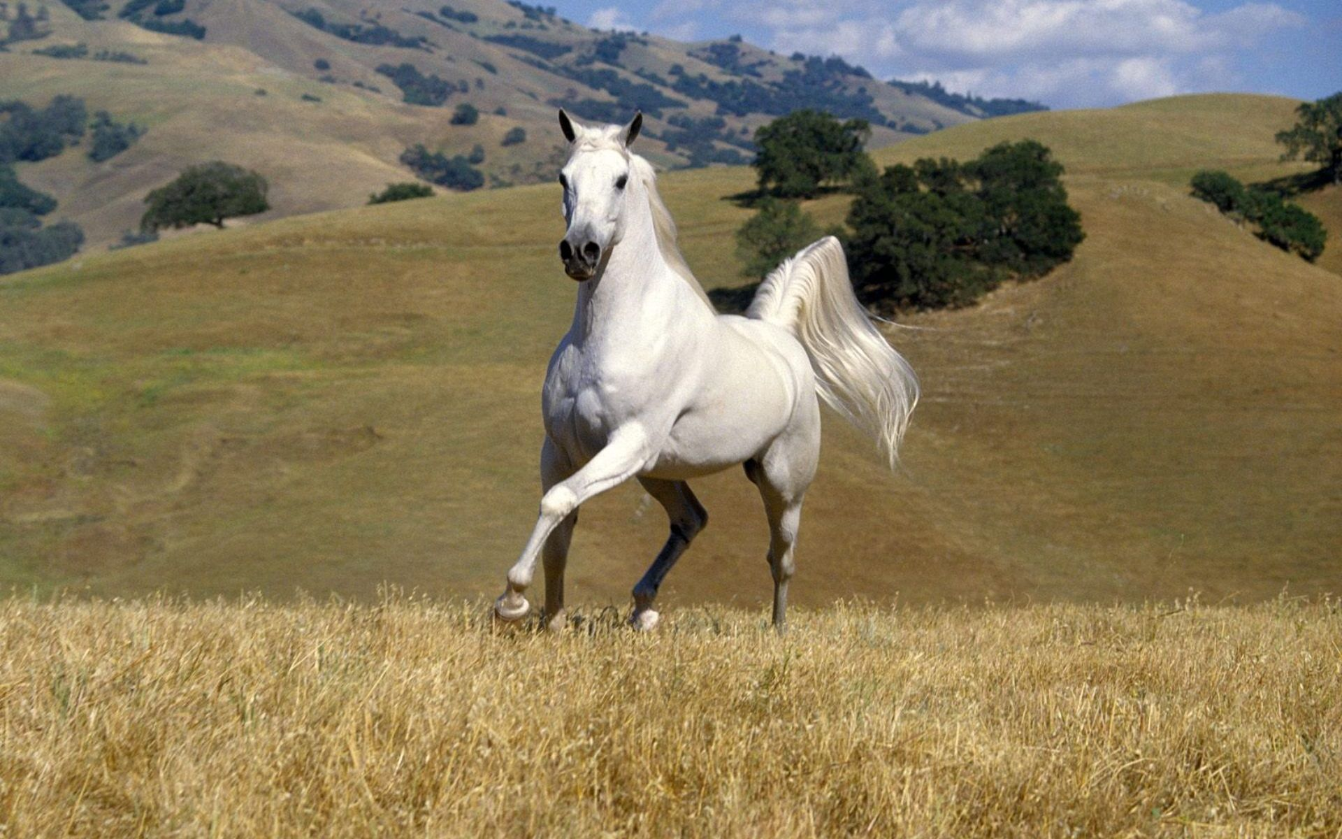 White horse on a foggy mountain wallpaper Animal wallpapers