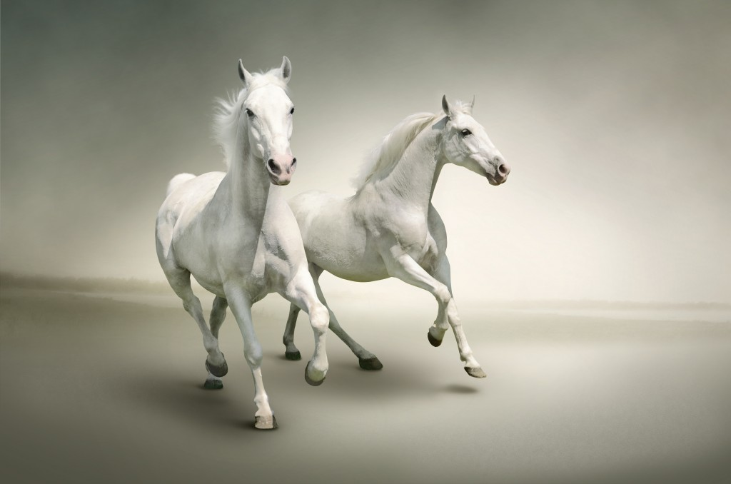 White Horse Wallpaper 6794x4500