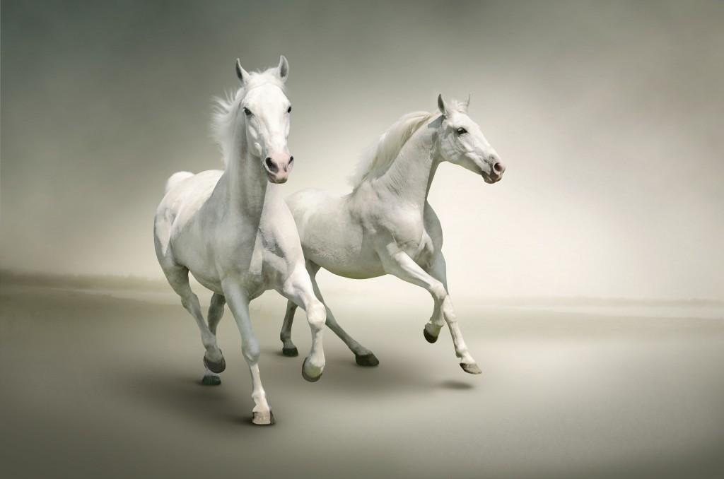 White Horse Wallpaper 6794x4500