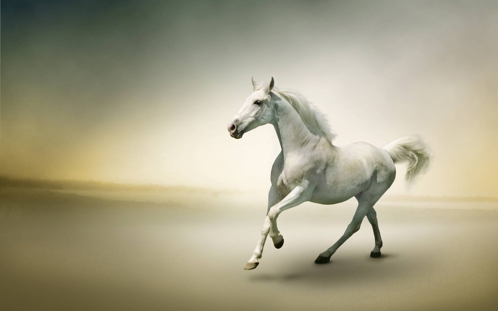 White Horse Widescreen Wallpaper 2560x1600