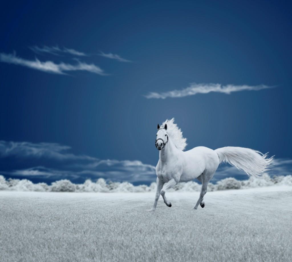 White Horse Wallpaper 1037x931