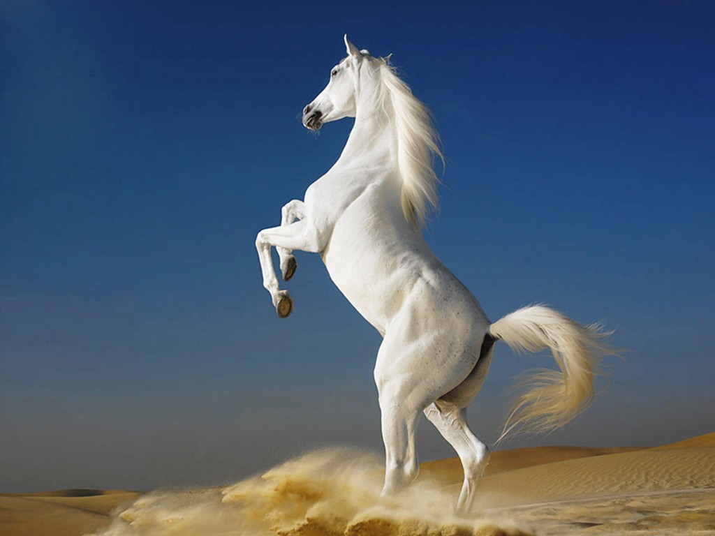 White Horse Wallpaper 2560x1920
