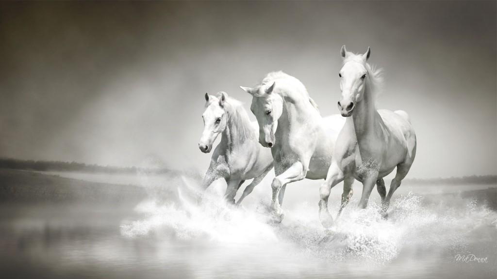 White Horse Full HD Wallpaper 1920x1080