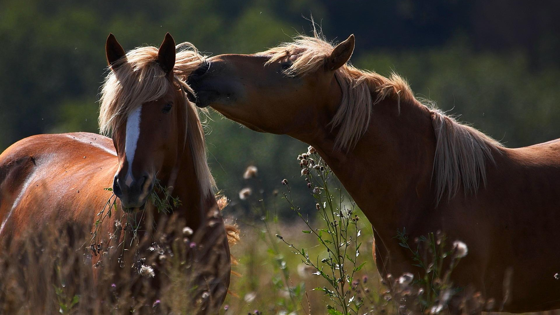 Wild Horse Wallpapers, Pictures, Images